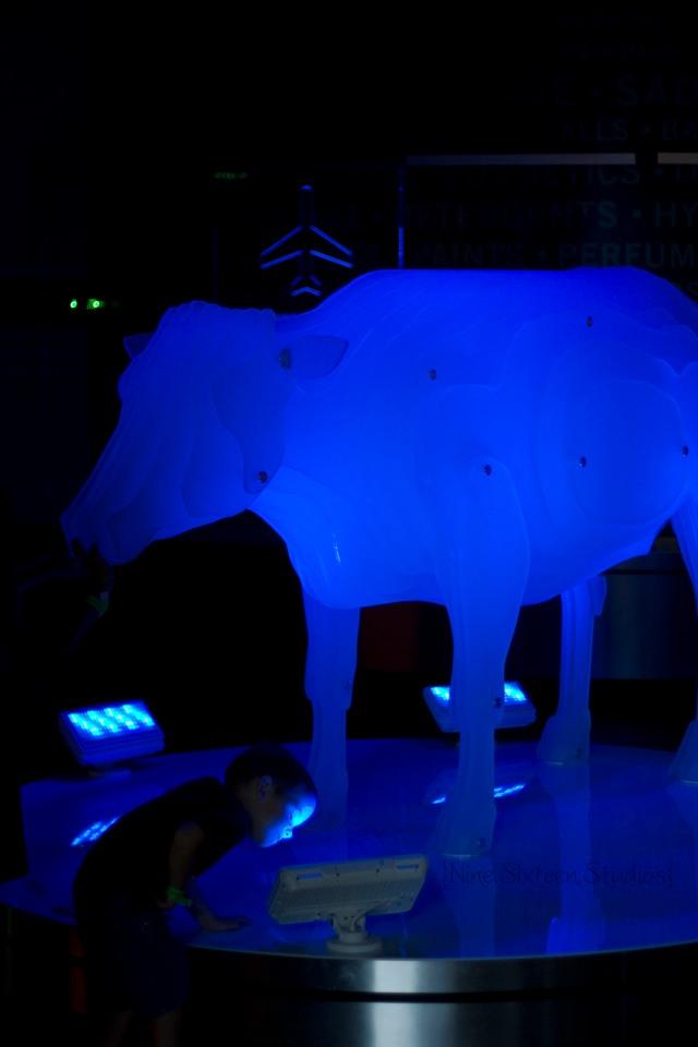 neon bull+bull